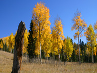 Autumn in the perfect time to plan your leaf peeping getaway to a Colorado B&B inn
