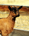 Mountain Goat Lodge is perfect for 'kids', goats that is!