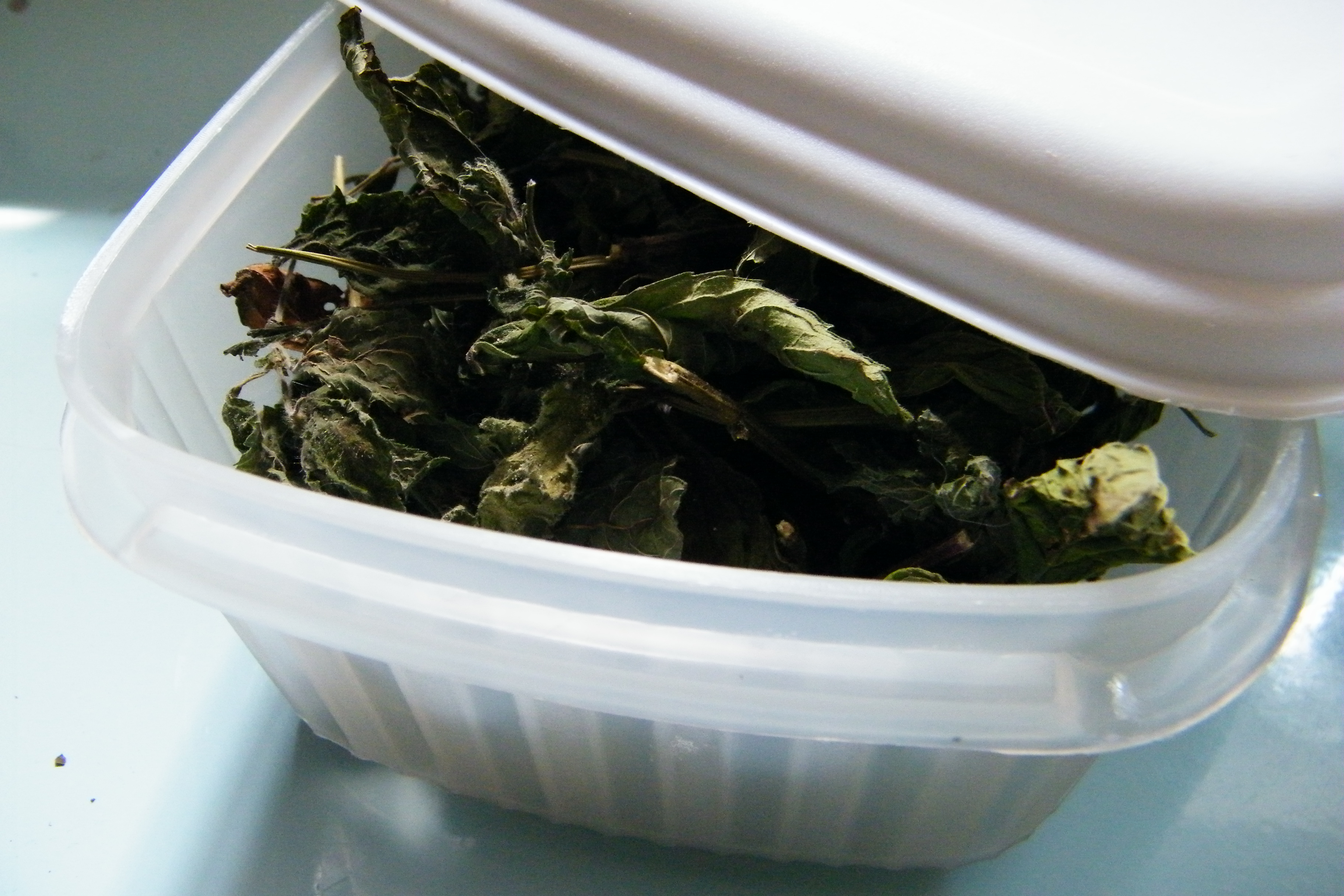 dried leaves in tupperware