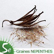 Graines de Nepenthes