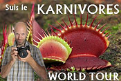Karnivores World Tour