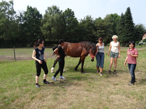 coaching with horses