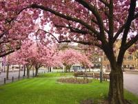 April - Spring Has Arrived