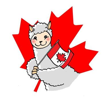 lower alpaca wholesale shipping to CANADA