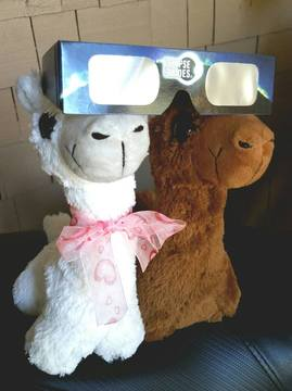 the alpaceclipse