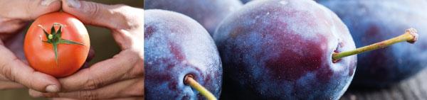 Interfel, le guide bio des filières fruits et légumes