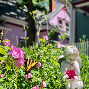 Take some time to smell the roses at Holden House