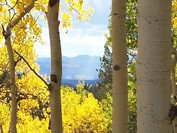 The Fall aspen color season is a great time to visit Holden House