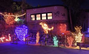 Electric Safari at the Cheyenne Mountain Zoo
