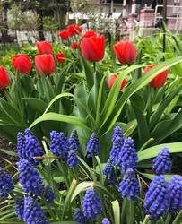 Spring and Summer burst with color in the Holden House gardens