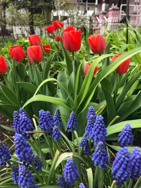Holden House Spring Garden