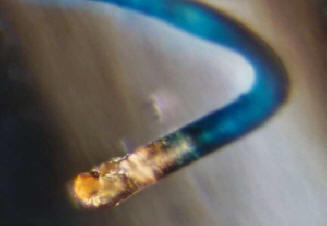 Morgellons is a Bioweapon: Blue Filiments Found in Food