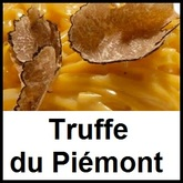 Truffe blanche du Piémont