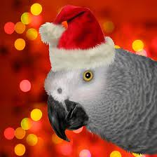 christmas parrot