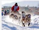 Iditarod 100% Alpaca Beanie Hat